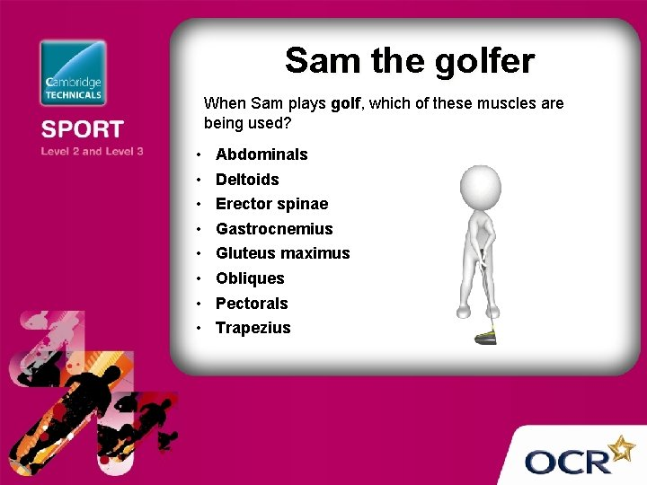Sam the golfer When Sam plays golf, which of these muscles are being used?