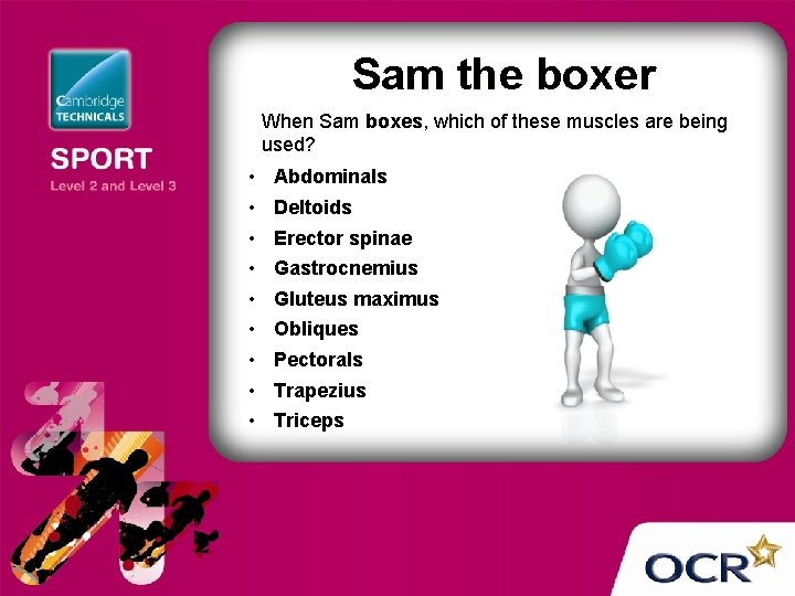 Sam the boxer When Sam boxes, which of these muscles are being used? •