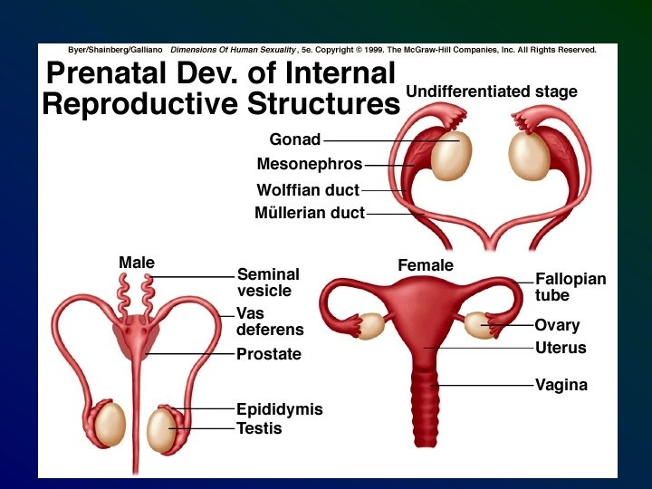 A prostatitis alatt alapok)