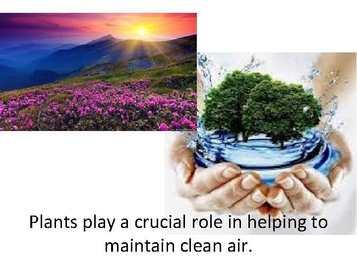 Plants play a crucial role in helping to maintain clean air.