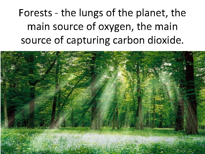 Forests - the lungs of the planet, the main source of oxygen, the main
