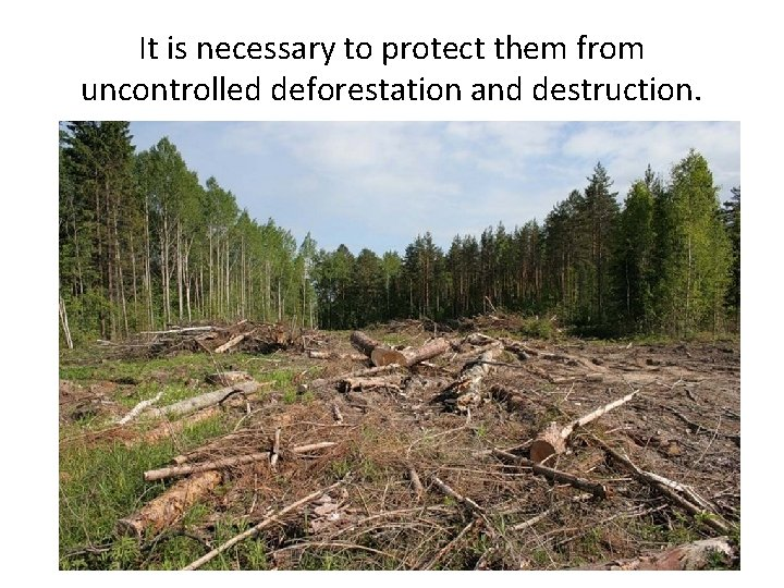 It is necessary to protect them from uncontrolled deforestation and destruction.