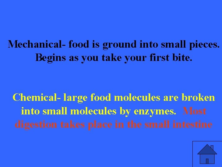 Mechanical- food is ground into small pieces. Begins as you take your first bite.