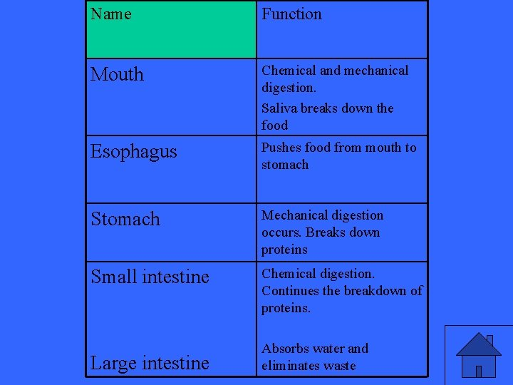 Name Function Mouth Chemical and mechanical digestion. Saliva breaks down the food Esophagus Pushes