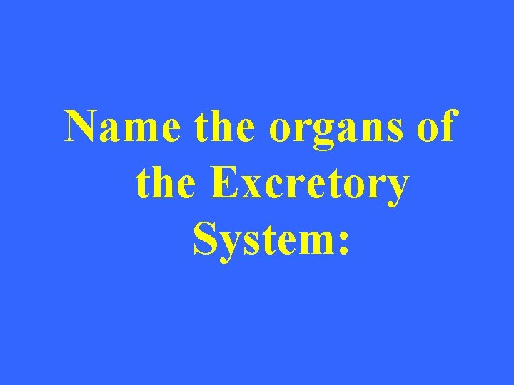 Name the organs of the Excretory System: