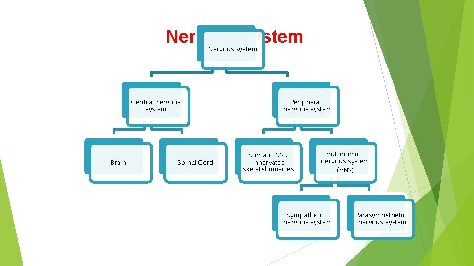 Nervous system Central nervous system Brain Spinal Cord Peripheral nervous system Somatic NS ,
