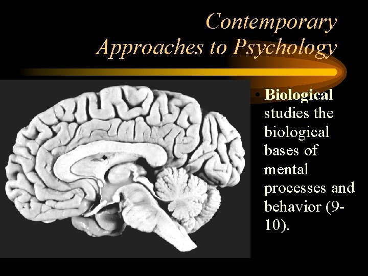 Contemporary Approaches to Psychology • Biological studies the biological bases of mental processes and