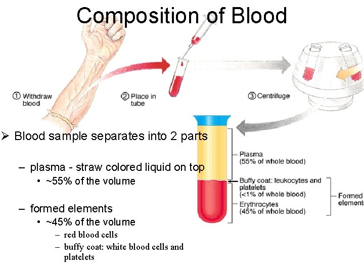 Composition of Blood Ø Blood sample separates into 2 parts – plasma - straw