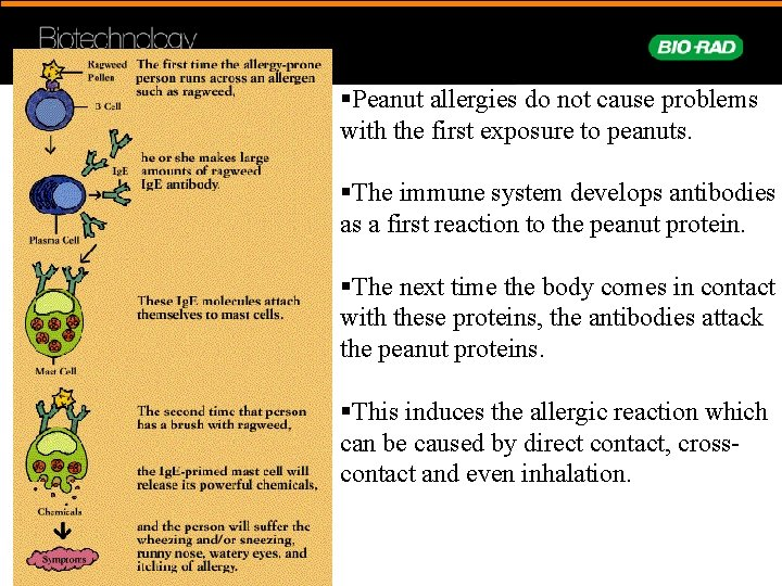 §Peanut allergies do not cause problems with the first exposure to peanuts. §The immune