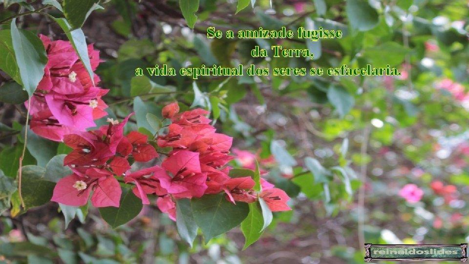 Se a amizade fugisse da Terra, a vida espiritual dos seres se esfacelaria.