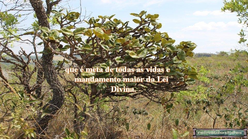 que é meta de todas as vidas e mandamento maior da Lei Divina.