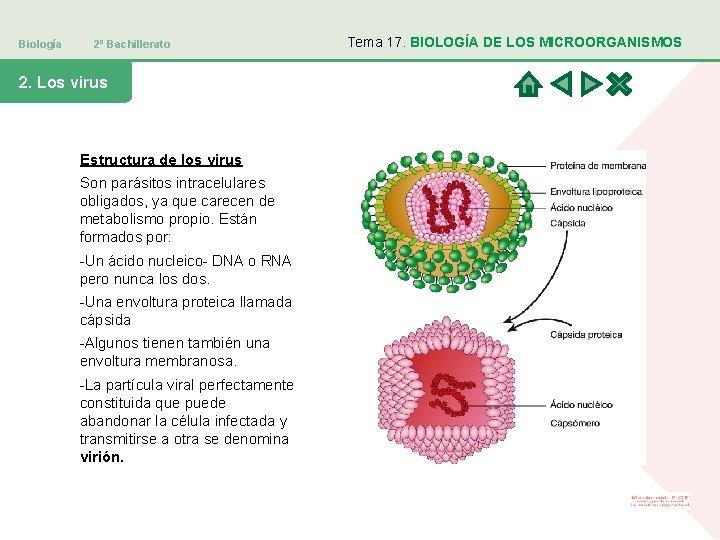 Biología 2º Bachillerato 2. Los virus Estructura de los virus Son parásitos intracelulares obligados,