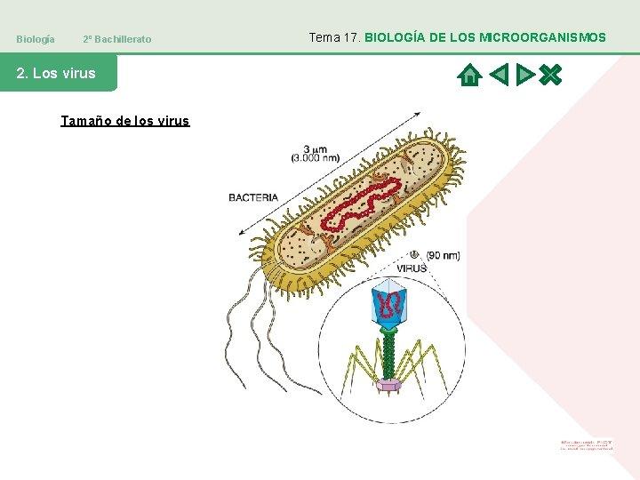Biología 2º Bachillerato 2. Los virus Tamaño de los virus Tema 17. BIOLOGÍA DE