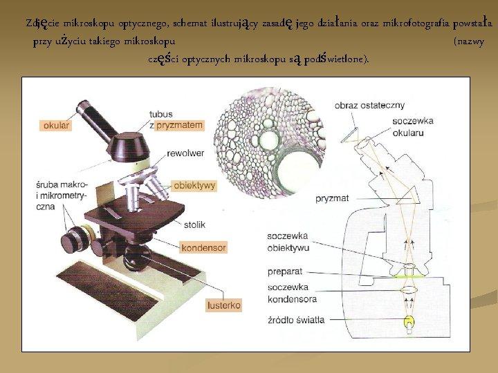 Zdjęcie mikroskopu optycznego, schemat ilustrujący zasadę jego działania oraz mikrofotografia powstała przy użyciu takiego