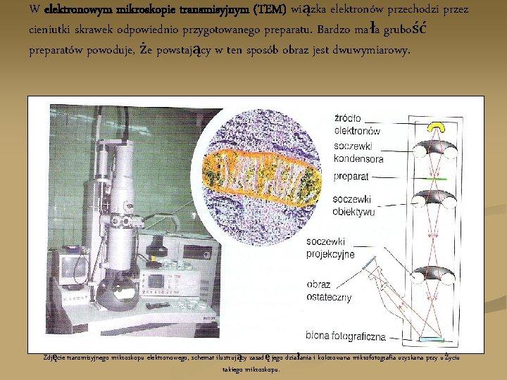 W elektronowym mikroskopie transmisyjnym (TEM) wiązka elektronów przechodzi przez cieniutki skrawek odpowiednio przygotowanego preparatu.