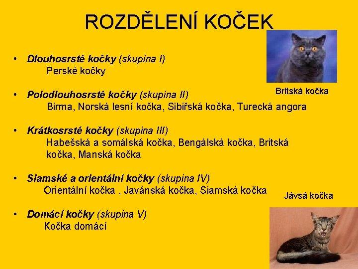 ROZDĚLENÍ KOČEK • Dlouhosrsté kočky (skupina I) Perské kočky Britská kočka • Polodlouhosrsté kočky
