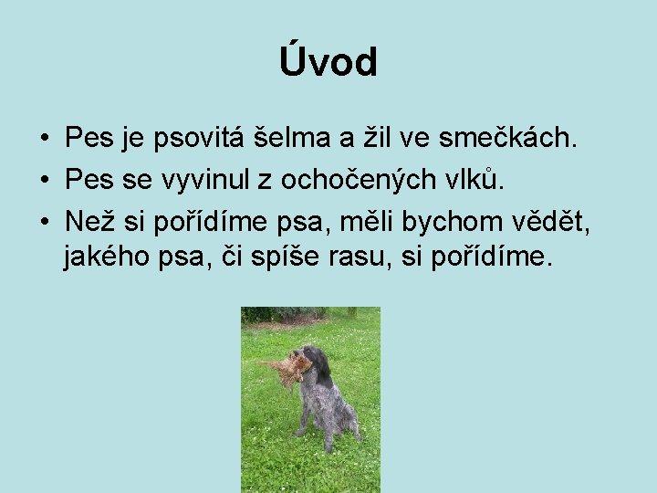 Úvod • Pes je psovitá šelma a žil ve smečkách. • Pes se vyvinul
