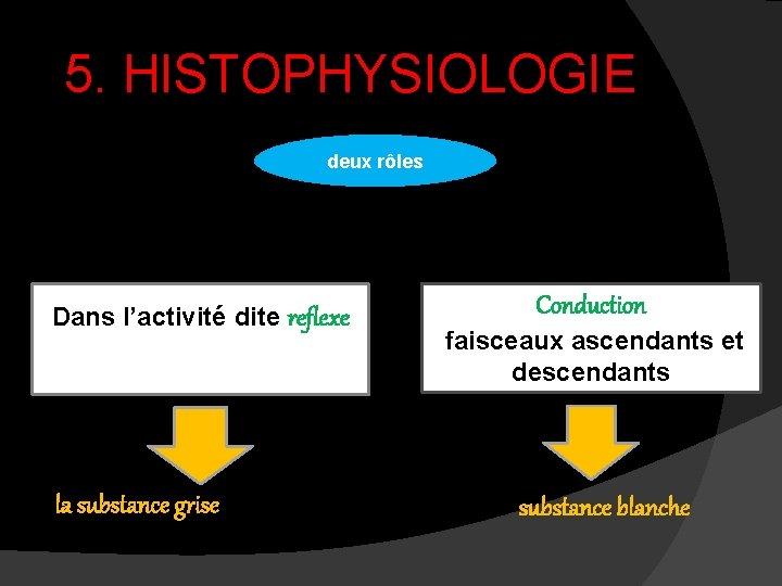 5. HISTOPHYSIOLOGIE deux rôles Dans l'activité dite reflexe la substance grise Conduction faisceaux ascendants