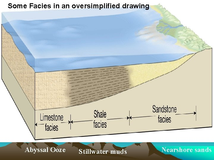 Some Facies in an oversimplified drawing Abyssal Ooze Stillwater muds Nearshore sands