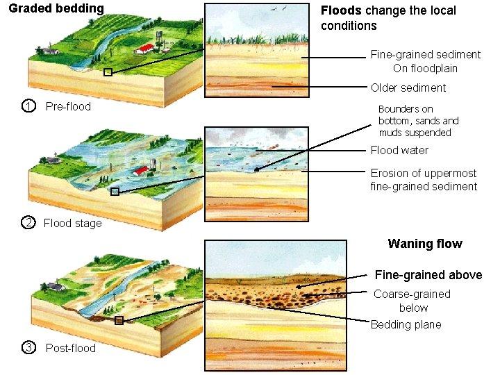 Graded bedding Floods change the local conditions 6_6 Fine-grained sediment On floodplain Older sediment