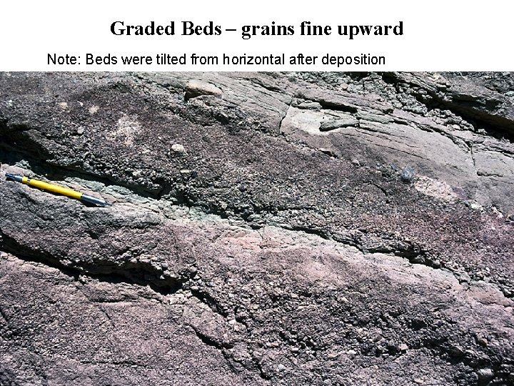 Graded Beds – grains fine upward Note: Beds were tilted from horizontal after deposition