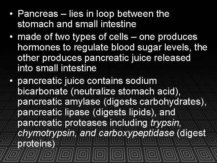 • Pancreas – lies in loop between the stomach and small intestine •