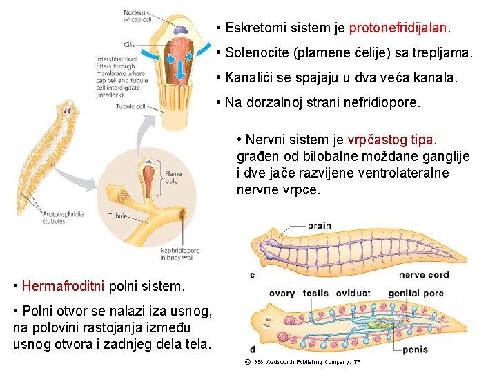 tubulus paraziták)