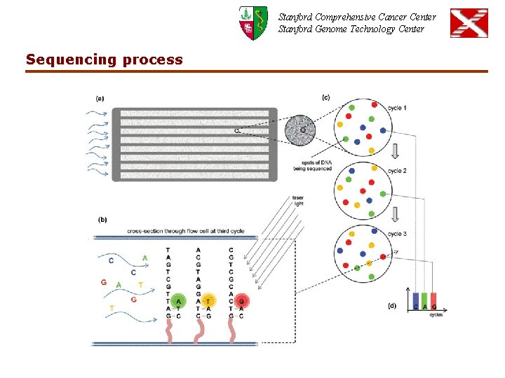 Stanford Comprehensive Cancer Center Stanford Genome Technology Center Sequencing process