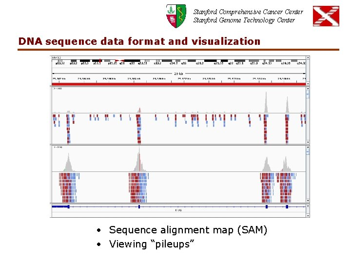 Stanford Comprehensive Cancer Center Stanford Genome Technology Center DNA sequence data format and visualization