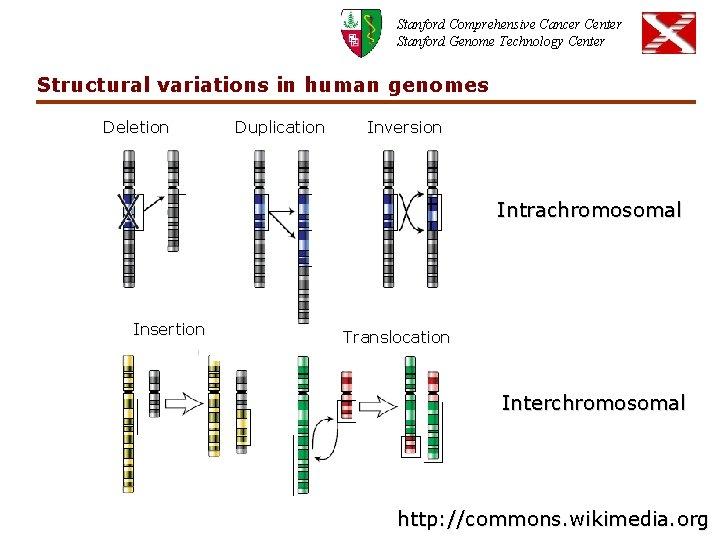 Stanford Comprehensive Cancer Center Stanford Genome Technology Center Structural variations in human genomes Deletion