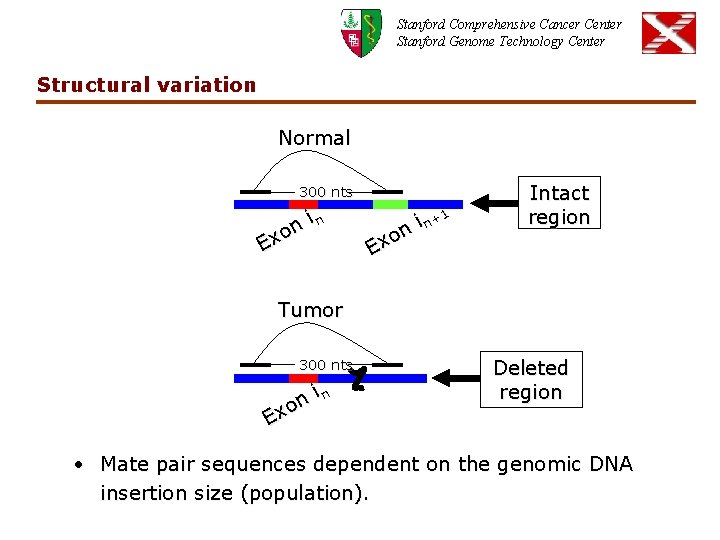 Stanford Comprehensive Cancer Center Stanford Genome Technology Center Structural variation Normal 300 nts in