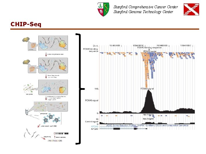 Stanford Comprehensive Cancer Center Stanford Genome Technology Center CHIP-Seq