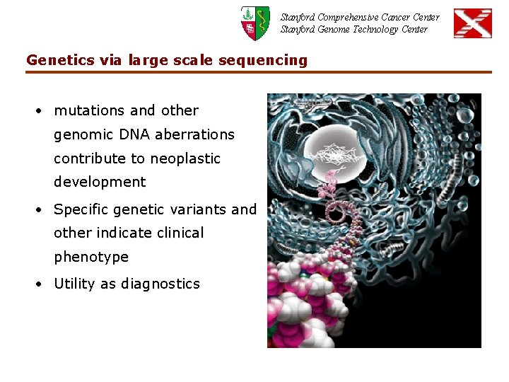 Stanford Comprehensive Cancer Center Stanford Genome Technology Center Genetics via large scale sequencing •