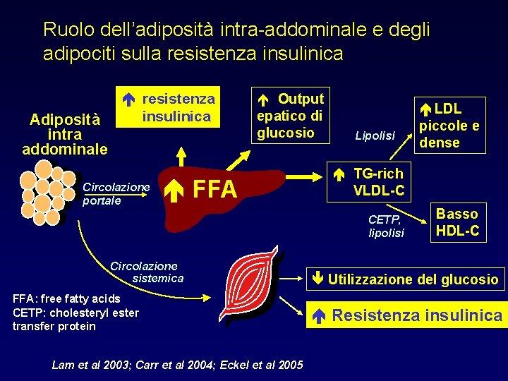 Ruolo dell'adiposità intra-addominale e degli adipociti sulla resistenza insulinica Adiposità intra addominale resistenza insulinica