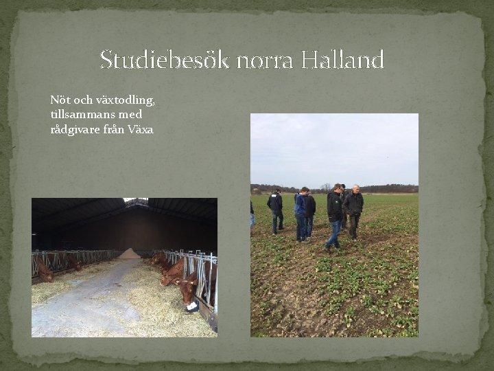 Studiebesök norra Halland Nöt och växtodling, tillsammans med rådgivare från Växa