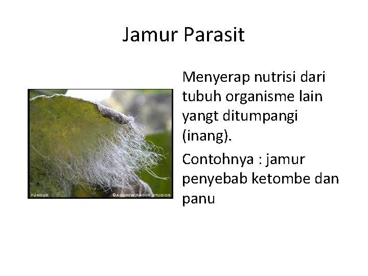 Jamur Parasit Menyerap nutrisi dari tubuh organisme lain yangt ditumpangi (inang). Contohnya : jamur