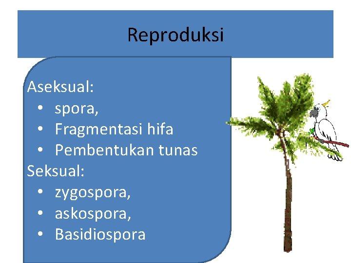 Reproduksi Aseksual: • spora, • Fragmentasi hifa • Pembentukan tunas Seksual: • zygospora, •