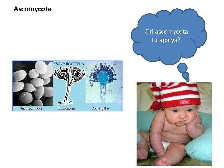 Ascomycota Ciri ascomycota tu apa ya?