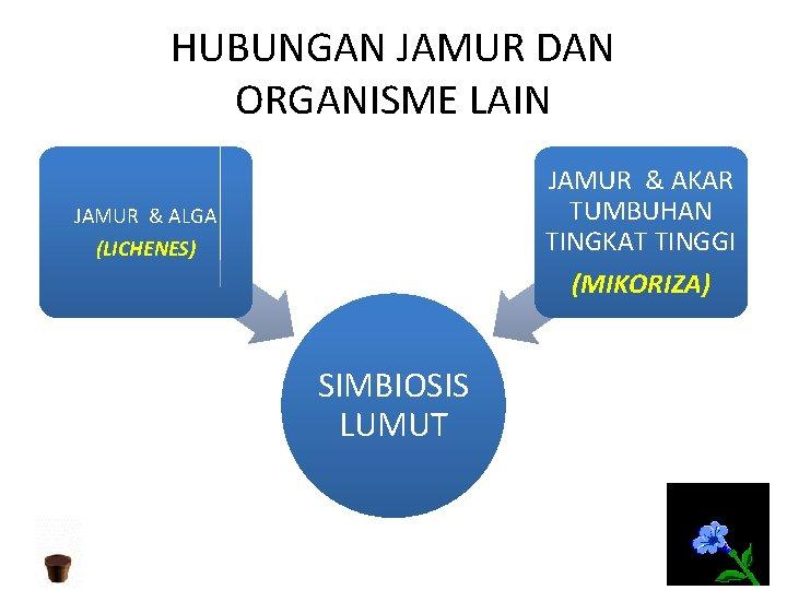 HUBUNGAN JAMUR DAN ORGANISME LAIN JAMUR & AKAR TUMBUHAN TINGKAT TINGGI (MIKORIZA) JAMUR &