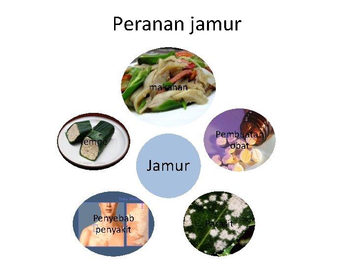 Peranan jamur makanan Pembuatan obat tempe Jamur Penyebab penyakit Parasit