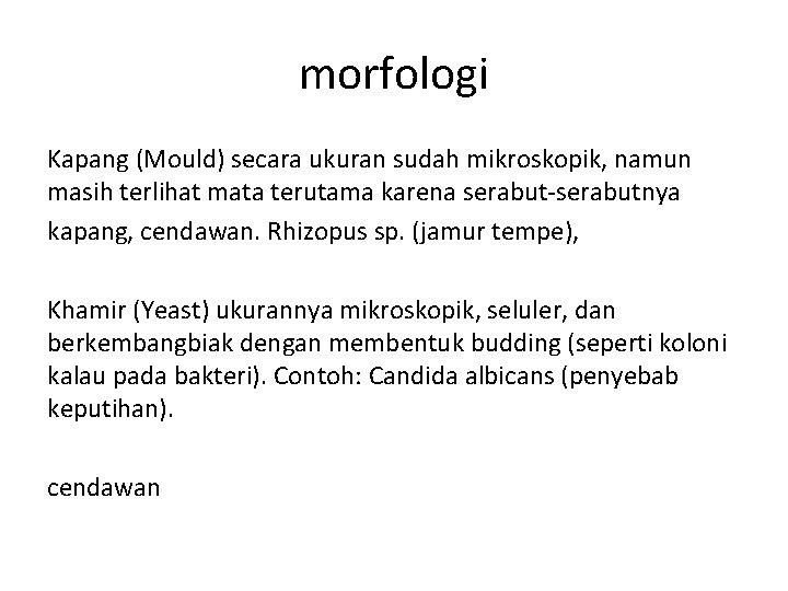 morfologi Kapang (Mould) secara ukuran sudah mikroskopik, namun masih terlihat mata terutama karena serabut-serabutnya