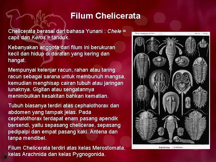 Filum Chelicerata berasal dari bahasa Yunani : Chele = capit dan Keros = tanduk.