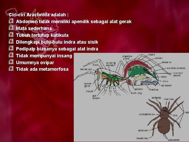 Ciri-ciri Arachnida adalah : Abdomen tidak memiliki apendik sebagai alat gerak Mata sederhana Tubuh