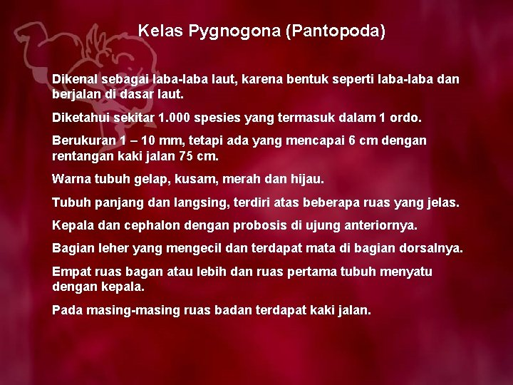 Kelas Pygnogona (Pantopoda) Dikenal sebagai laba-laba laut, karena bentuk seperti laba-laba dan berjalan di