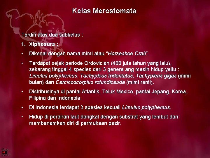 Kelas Merostomata Terdiri atas dua subkelas : 1. Xiphosura : • Dikenal dengan nama