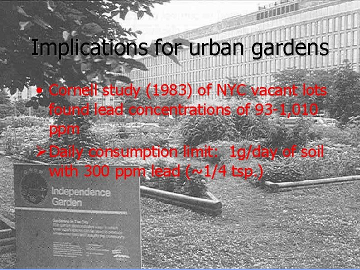Implications for urban gardens • Cornell study (1983) of NYC vacant lots found lead