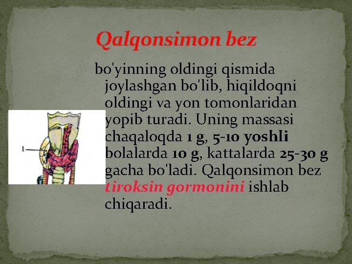 Qalqonsimon bez bo'yinning oldingi qismida joylashgan bo'lib, hiqildoqni oldingi va yon tomonlaridan yopib turadi.