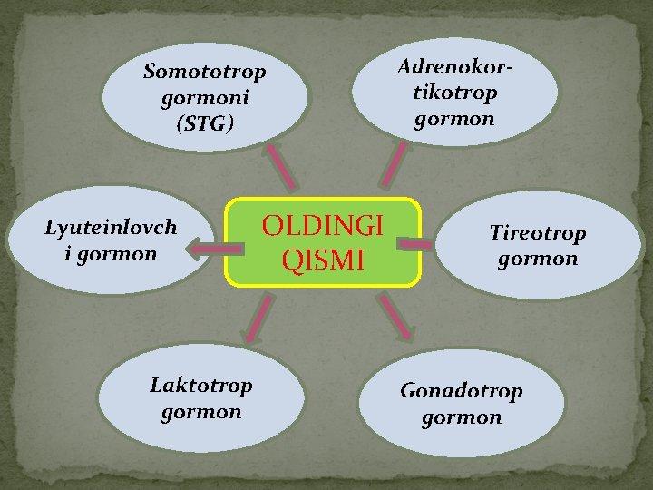 Somototrop gormoni (STG) Lyuteinlovch i gormon Laktotrop gormon OLDINGI QISMI Adrenokortikotrop gormon Tireotrop gormon