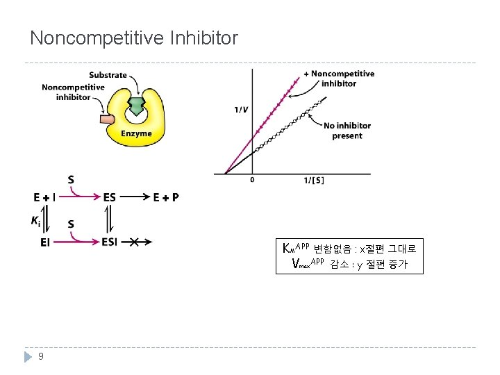 Noncompetitive Inhibitor KMAPP 변함없음 : x절편 그대로 Vmax. APP 감소 : y 절편 증가