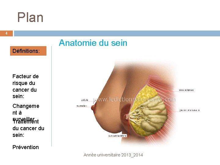Plan 4 Anatomie du sein Définitions: Facteur de risque du cancer du sein: Changeme